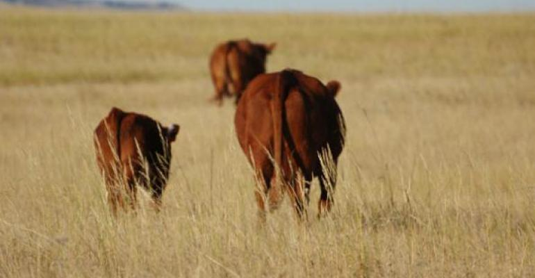 Cattle, price cycles return with a vengeance