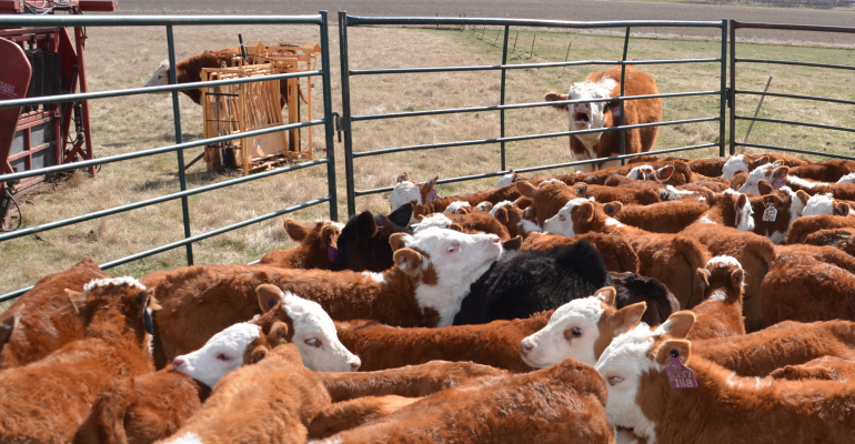 Weaning this summer? Stress and heat don't mix