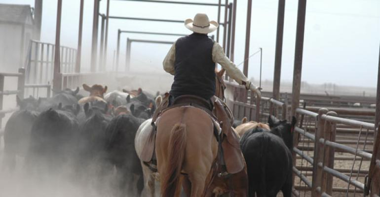 Working cattle in feedlots on horses