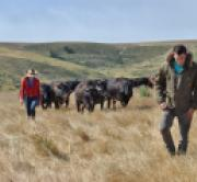 How To Control Sucking & Biting Lice On Cattle   Beef Magazine