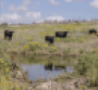 Water issues intensify; will the livestock industry be left in the dust?