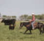 Low-stress handling during weaning pays big