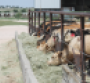 2016 Feed Composition Tables: How to discover the nutritional value of 280 cattle feedstuffs