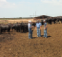 Communication is essential when retaining ownership of your calves through the feeding phase Tom Fanning left manager of Buffalo Feeders at Buffalo Okla discusses the performance of cattle owned by RA Bentley of Buffalo Okla center and his son Cole