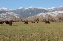 Seedstock 100: Balance tops bull buyers' list