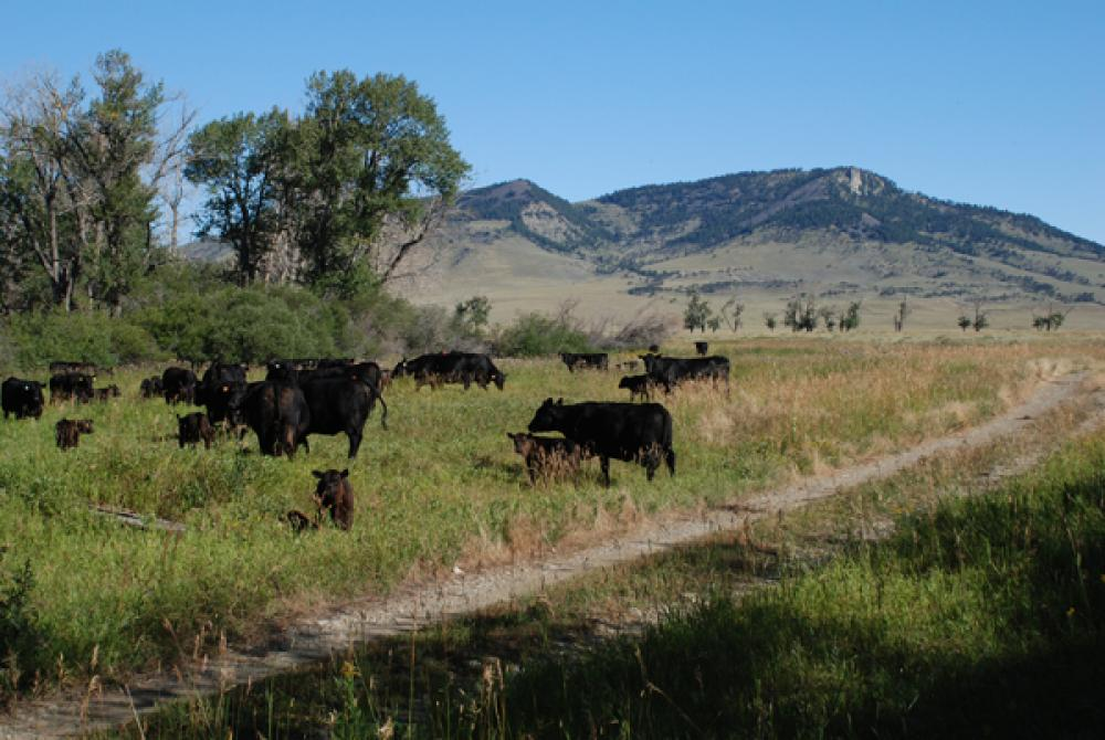 fall pasture management tips