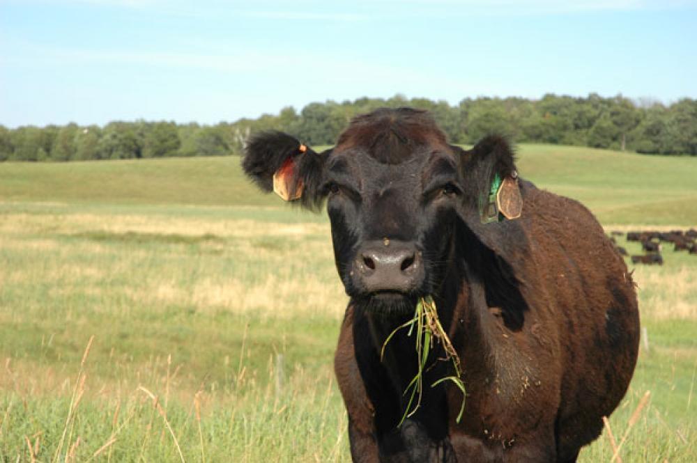 fertilizer tips for pasture