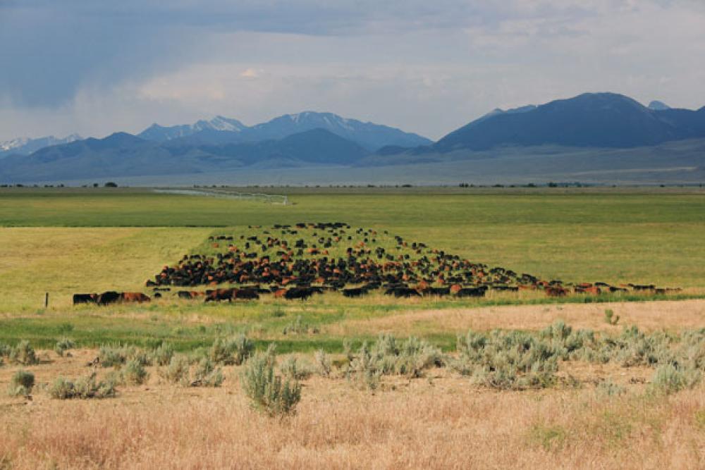 mob grazing intensive grazing tips