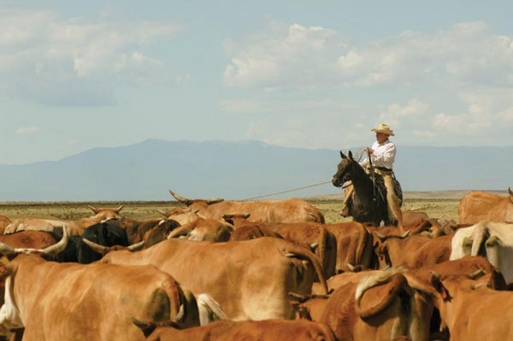 Colorado Rancher Utilizes Holistic Management Concepts