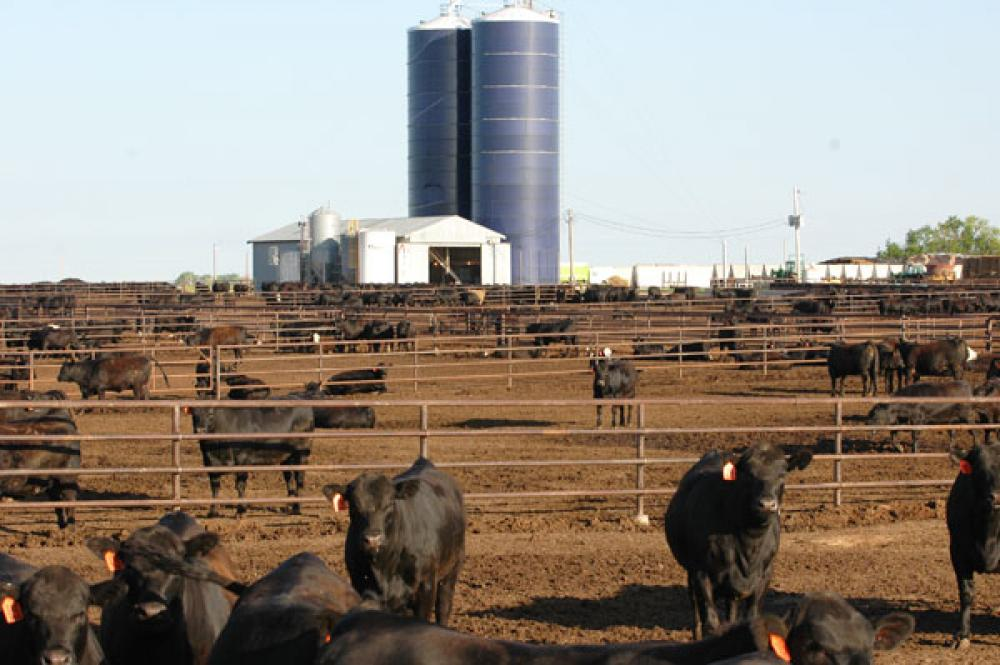 Nearly 75% Of U.S. Cattle Are Black-Hided; A Look Behind The Numbers