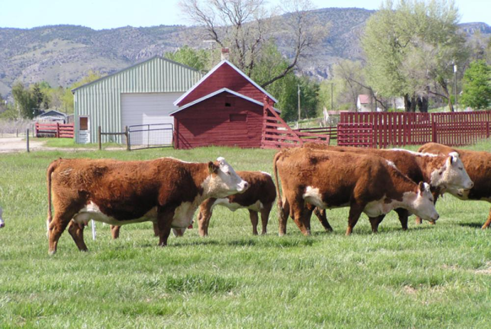 Farm And Ranch Kids Get Opportunity To Work