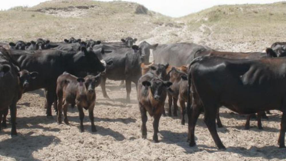 Controlling Parasites Doubly Important In Time Of Drought