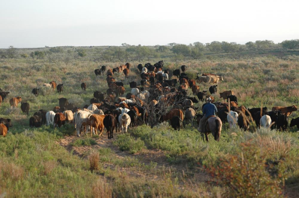 outlook for cattle prices is great