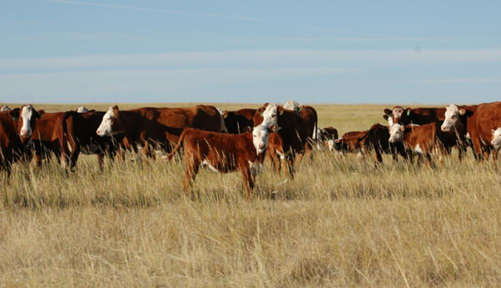 Profitable Ranching Necessitates Both Mental And Physical Work