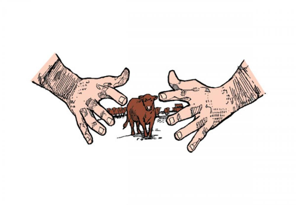 There Is No Magical Cow Size That Guarantees Profitability