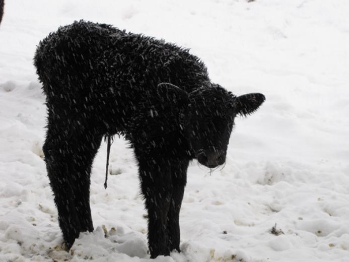 Baby in the Snow by Adrian Walck
