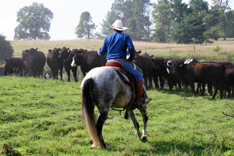 Cowboy Brian in Washington by Cynthia Nelson