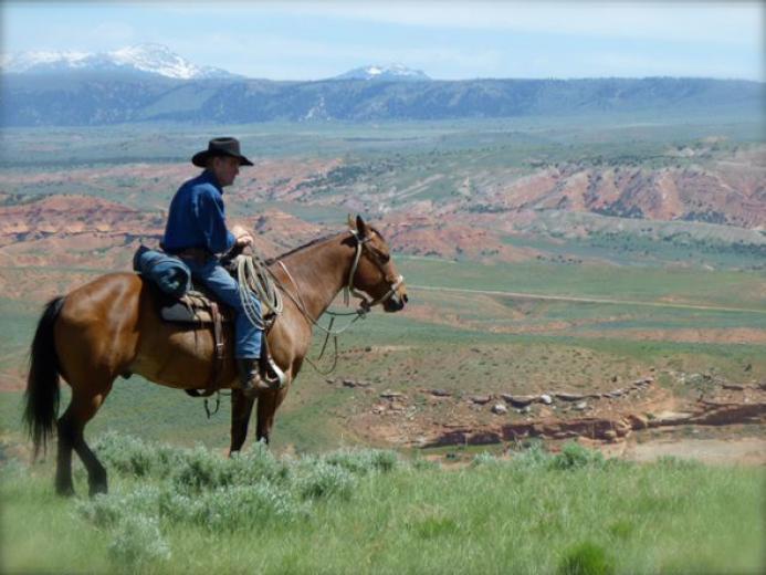 Cowboy by Carol Greet