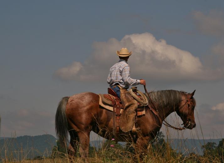 Cowboy by Sarah Wagoner