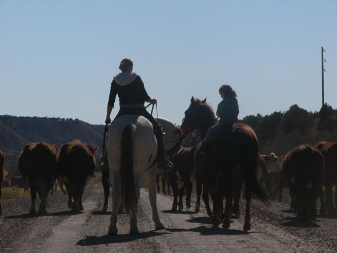 First Cattle Drive by Michele Barker