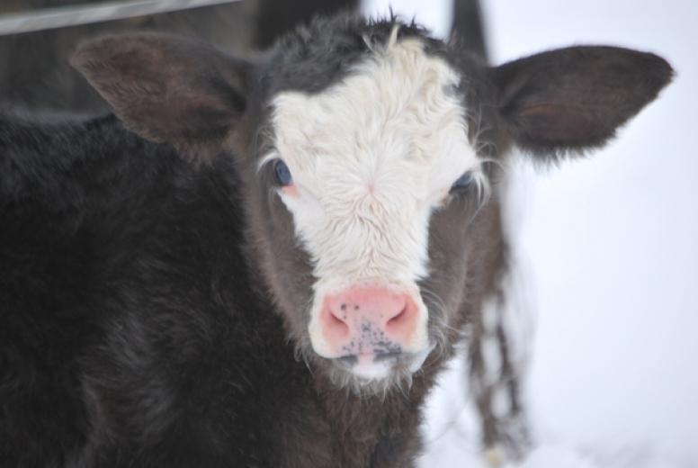 Nothing Like Warm Milk Winter Day by Theresa Pritchard