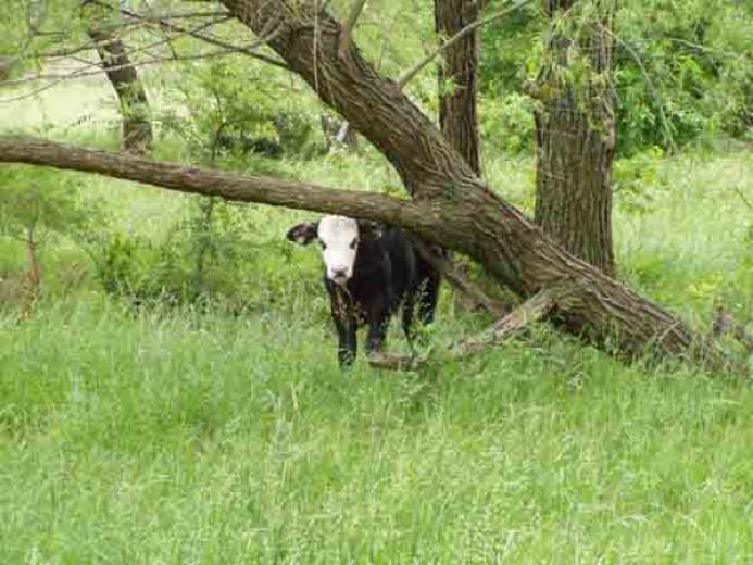 Peeking through the Tree by Steve and Donna Bramblett
