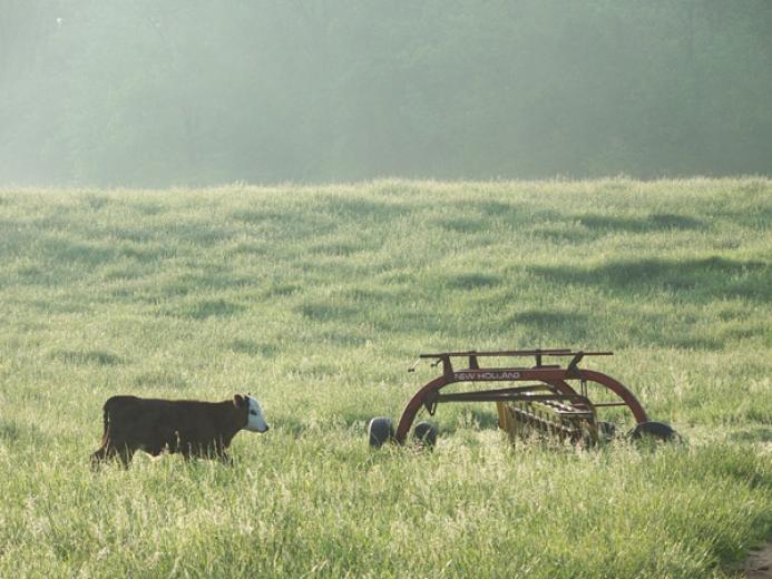 Sunrise in Hay Field by Abigail Robinson