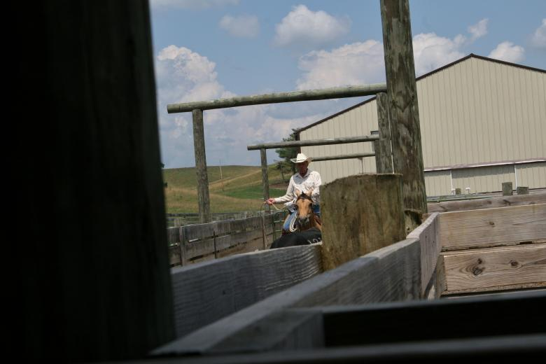 Working Cattle by Sarah Wagoner
