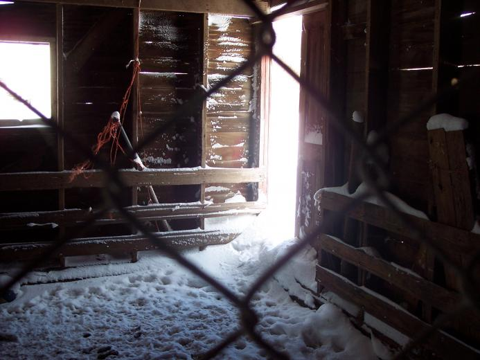 A Peak In The Barn by Kathie Rondeau.jpg
