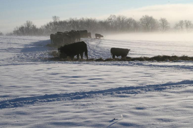 Christmas On Our Farm by Mike Yerhot