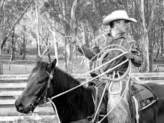 Cowboy Tough by Averi Regan