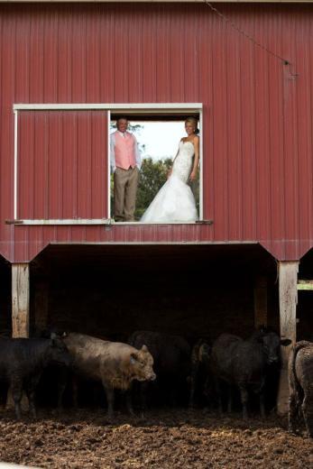 Cattle Feeding Sweetheart by Justine Hosch Stevenson