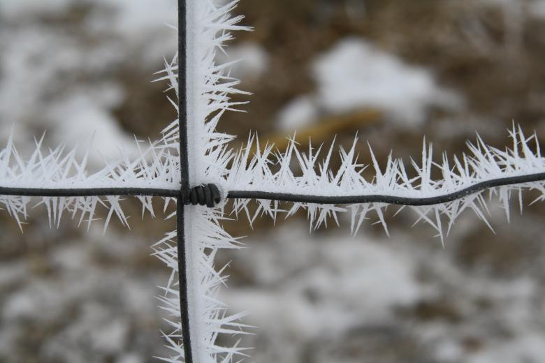 4. Frosty Wire by Carrie Ludwig