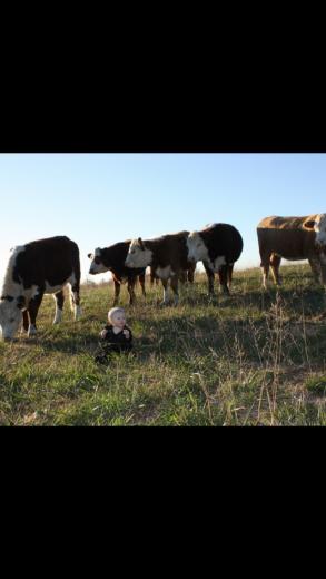Kameryn's Heifers by Brian Stoltze