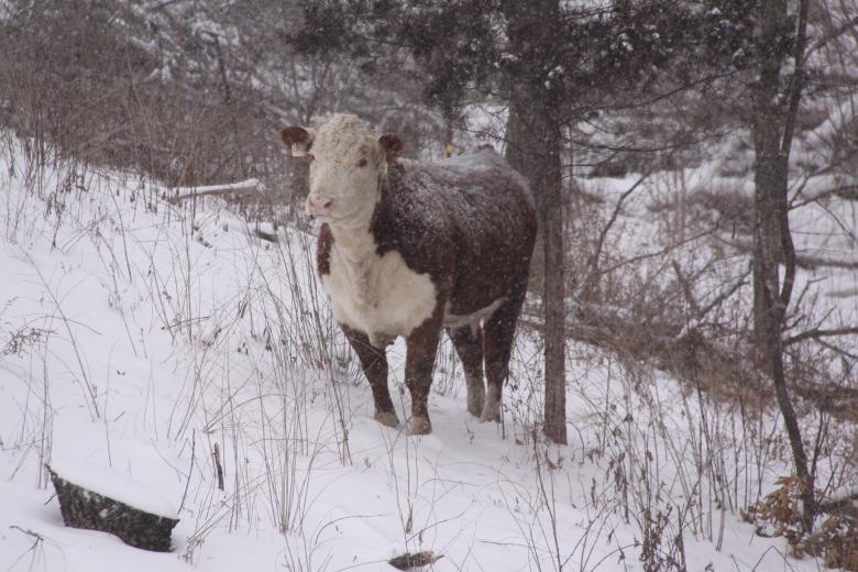 Pretty Girl In The Cold