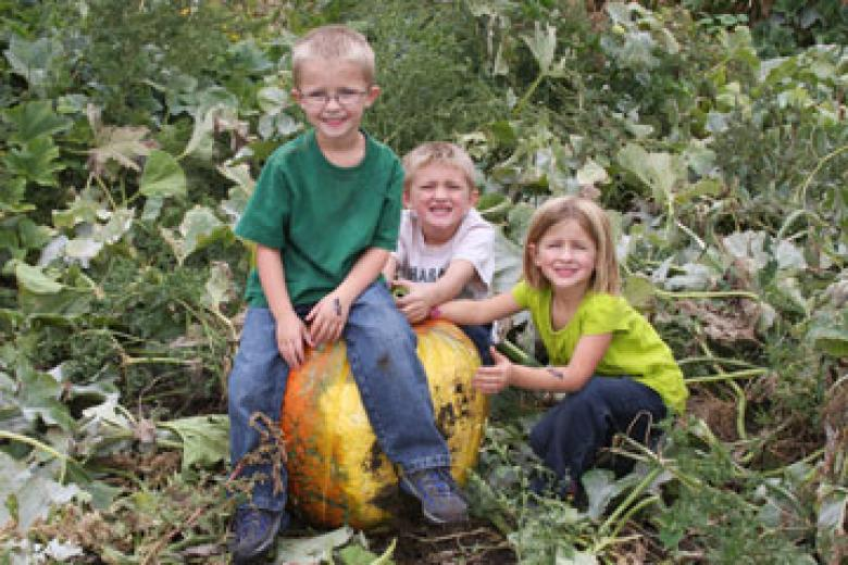 Pumpkin Picking by Sherry Stoffel