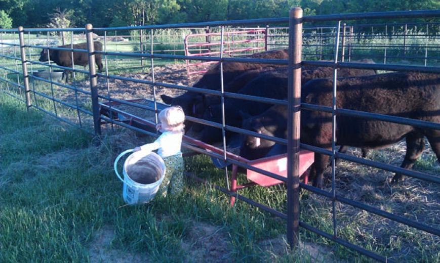 Quincie Feeding Heifers by Hayes Martens