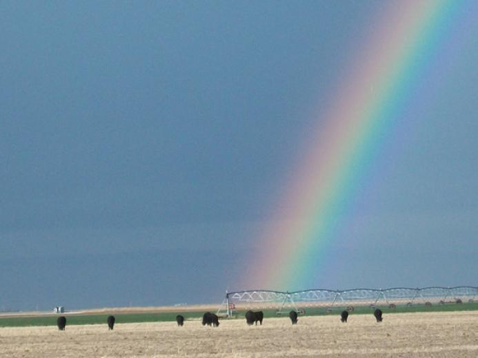 Rainbow by Duane Greene