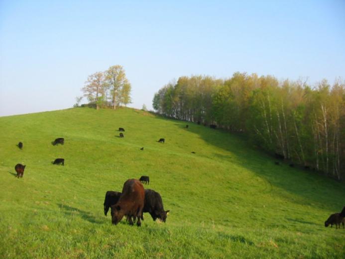 Roling Pastures by Allan Drinkman