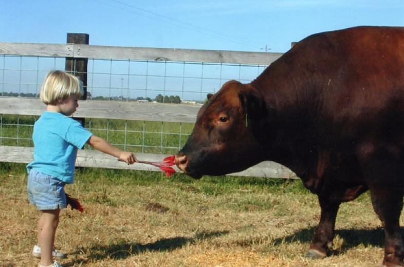 Rose And Her Herd Bull by Rita McPhee
