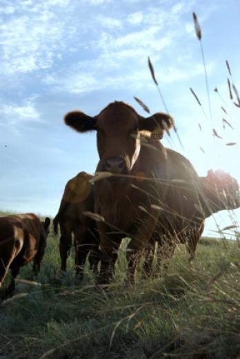 Summer Pastures by Pamela Roberts