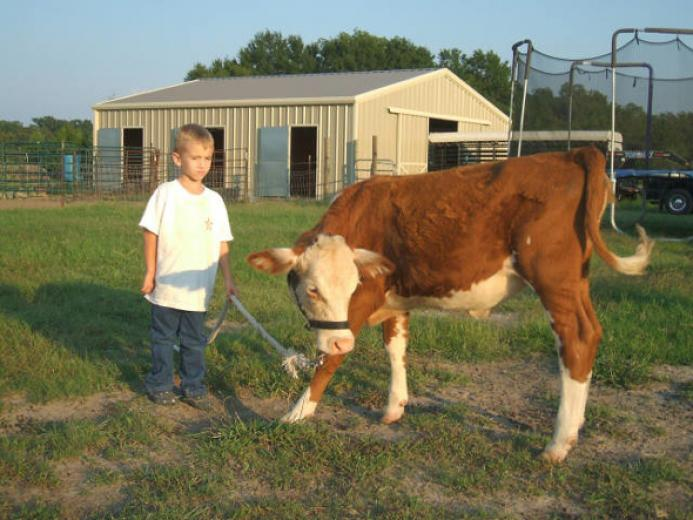 Trey And His Hereford by Stewart Horses