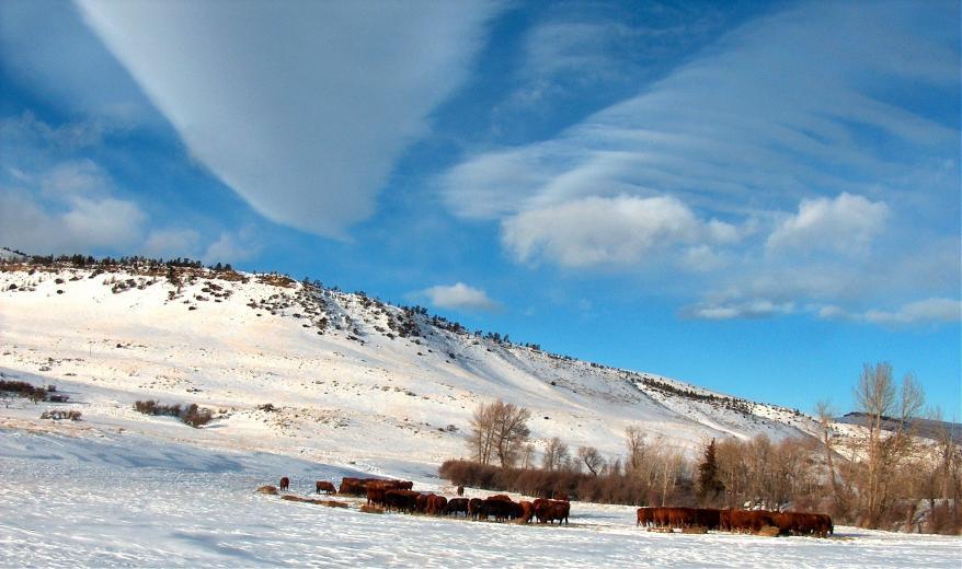 10. Winter Cows by Kent Hanawalt