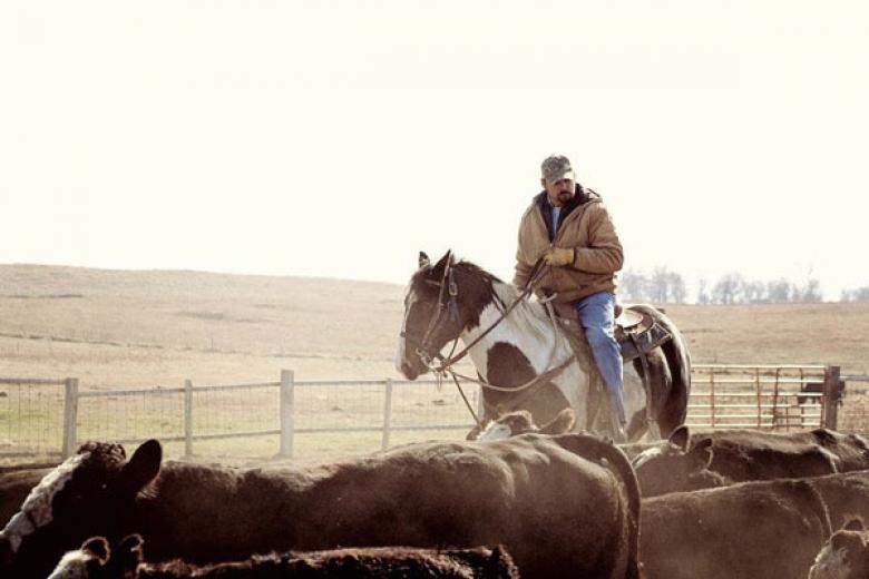 Working Cattle In Waubay by Anndell Bartlett