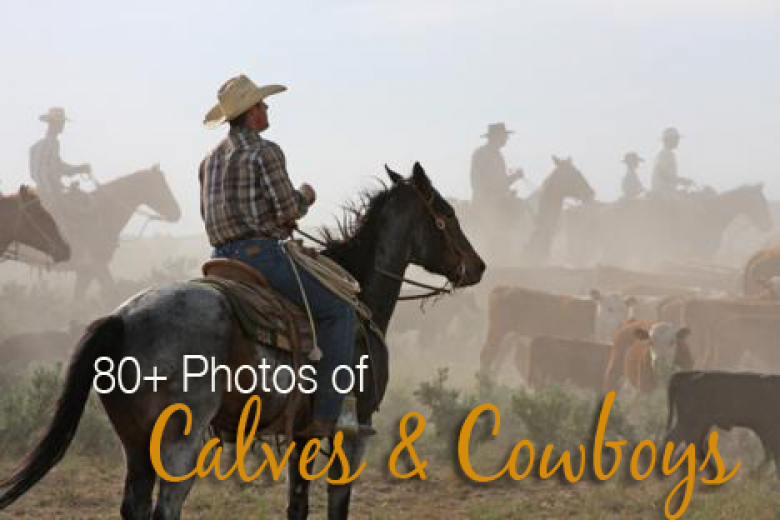 Trending Gallery: 80+ Photos of our Favorite Calves & Cowboys