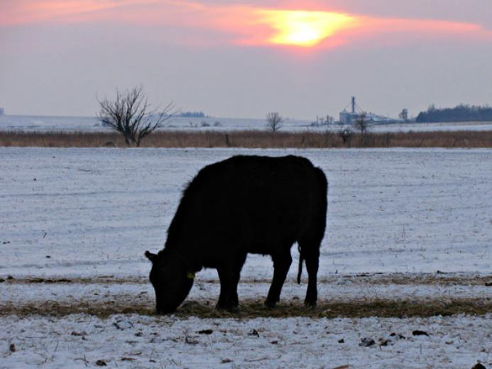 Winter Sunset On The Farm by Leanne Maciejack