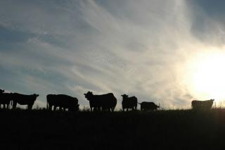 Here's why beef producers can be optimistic