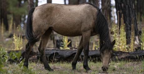 wild horse USDA.jpg