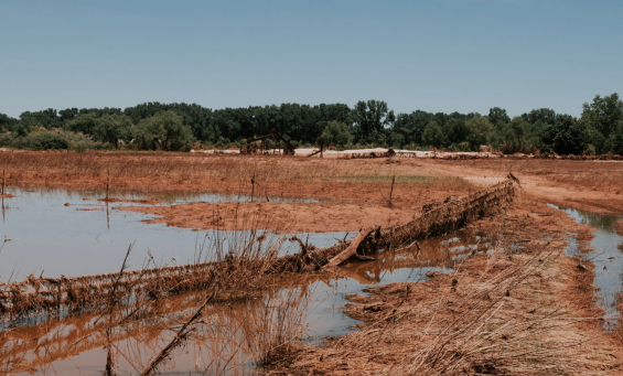 4 Trending Headlines: Recovering flooded pastures; PLUS: Your future, your choice