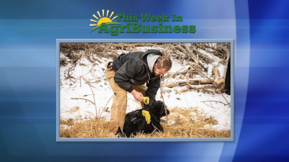 This Week in Agribusiness, Feb. 20, 2021
